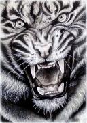 Comment Dessiner Un Tigre Galerie Creation